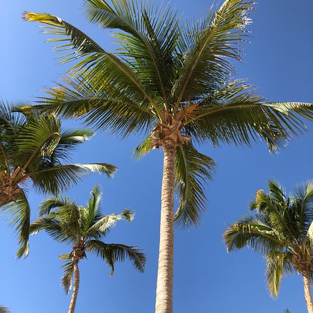 Rotana resort
