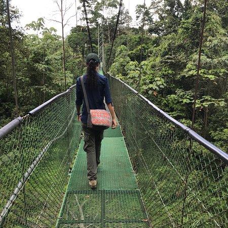 Tirimbina Rainforest Lodge Φωτογραφία