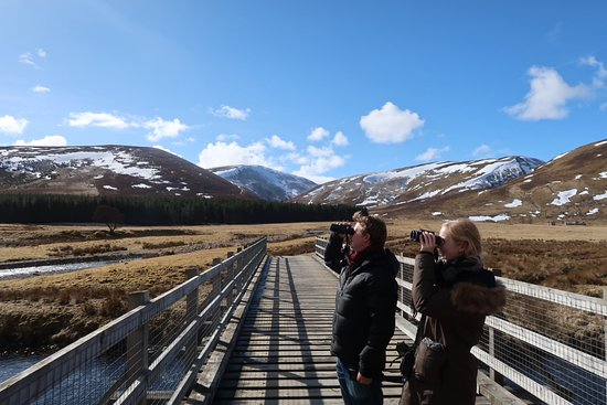 Highland Wildlife & Birdwatch Safaris: Searching for another Golden Eagle!
