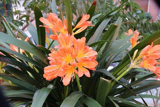 Fleur dans le jardin picture of cesare augusto for Fleurs dans le jardin