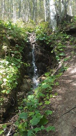 Sorgente del Tevere: Fiume Tevere sul Monte Fumaiolo