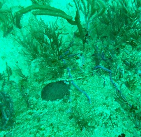Bon Accord, โตเบโก: Pic of coral