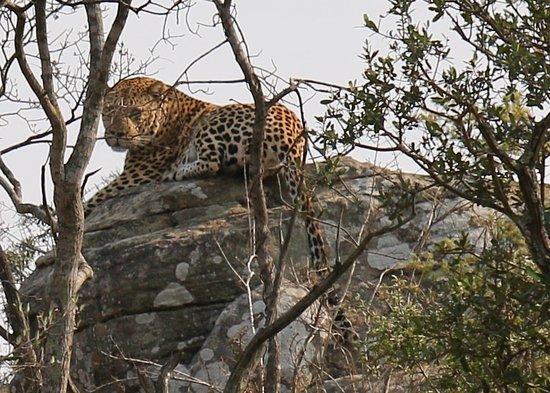 Mkuze Game Reserve, Sudáfrica: ein Prachtexemplar
