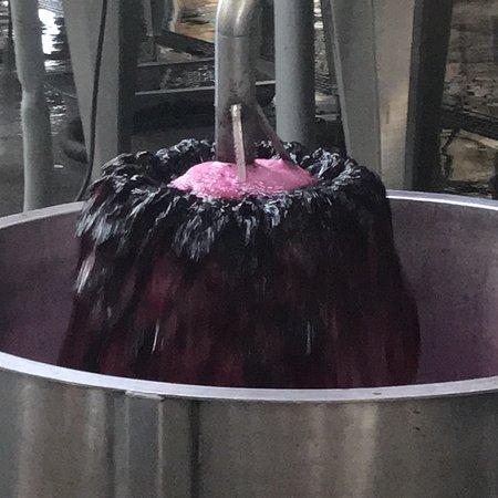 Vendimia Wine Tours: photo7.jpg
