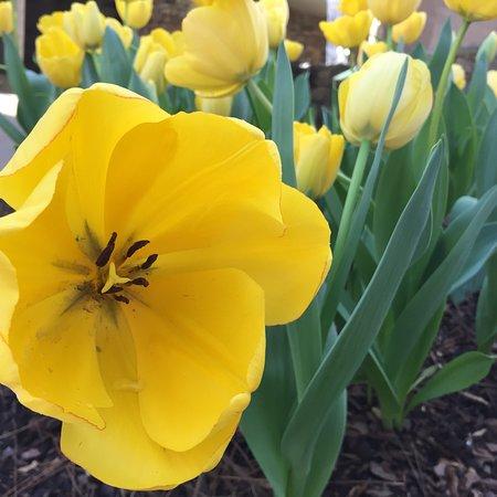 Huntsville Botanical Garden: photo1.jpg