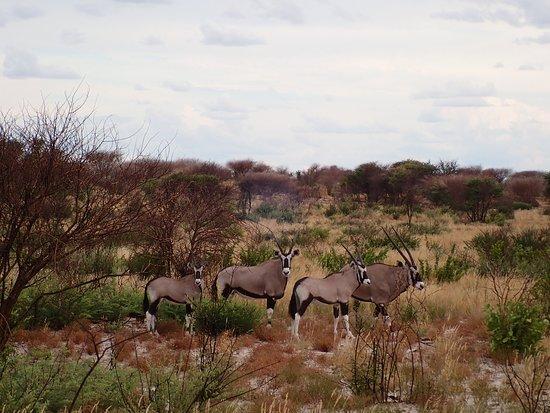 Bilde fra Central Kalahari Game Reserve
