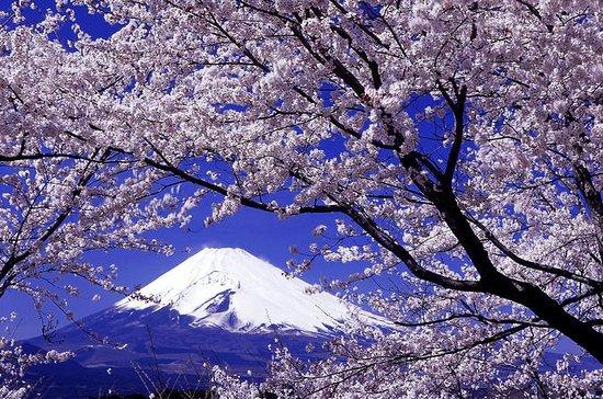 Cherry Blossom: Experience Yamanashi...