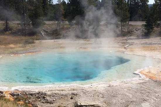 Yellowstone Guided Day Tour From...