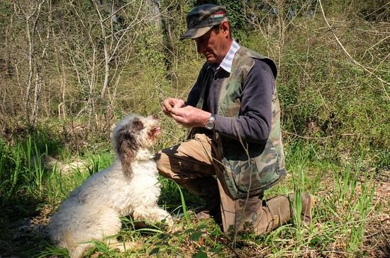Private Truffle hunt in Tuscany from...