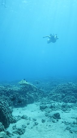 Aqua Adventures: Diving down for a pic with the turtle