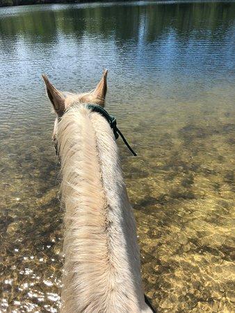 Bush, لويزيانا: Beautiful ride around the lake