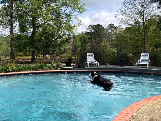 Bush, لويزيانا: Oliver loves jumping into her salt water pool!