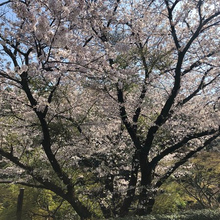 Beautiful in Spring