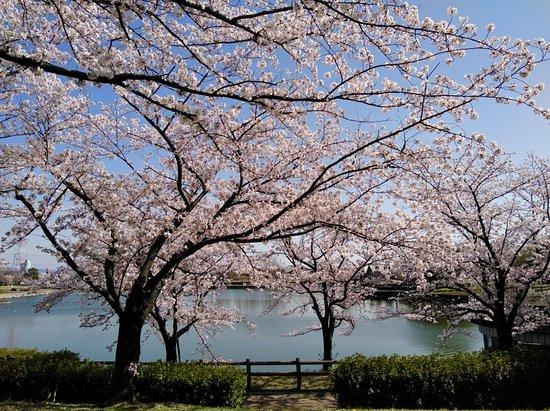 Ochiai Park