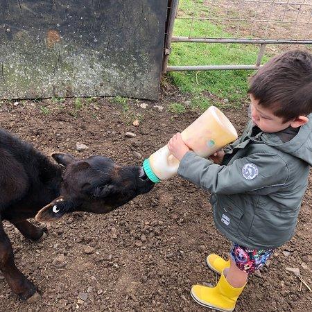 Ventnor, Australia: Easter Sunday visit to Bimbadeen Farm