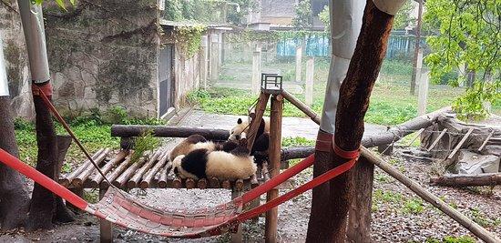Chongqing Zoo (Chongqing Dongwuyuan) : 20180324_095734_large.jpg