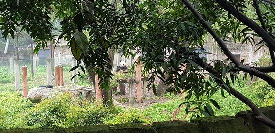 Chongqing Zoo (Chongqing Dongwuyuan) : 20180324_105502_large.jpg