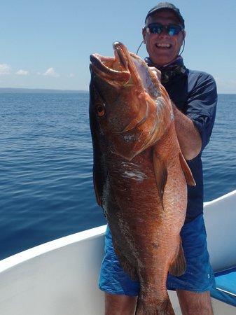 Drake Bay, Costa Rica: Huge Snapper