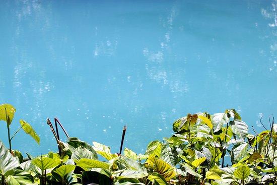 Национальный парк Вулкан Тенорио, Коста-Рика: Contrast. This photo is not manipulated.