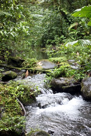 Tenorio Volcano National Park, Costa Rica: One of the two rivers that combine to form the blue water.