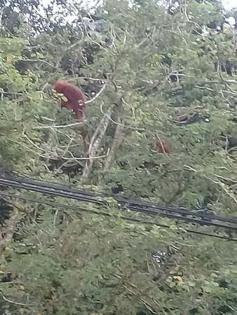 Sintang, Indonesia: Hutan Wisata Baning