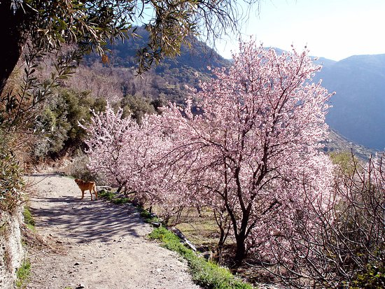 Pitres, إسبانيا: Going for a walk from Casa Ana in February.  There are miles and miles of footpaths to explore.