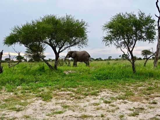 Nata, Botsuana: Elephant wandering just outside the camping area
