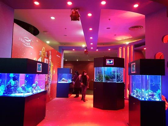 Shanghai Ocean Aquarium: Entrance