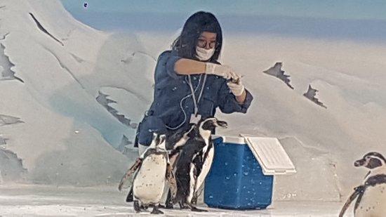 Shanghai Ocean Aquarium: Pinguim