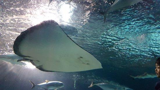 Shanghai Ocean Aquarium: Pic