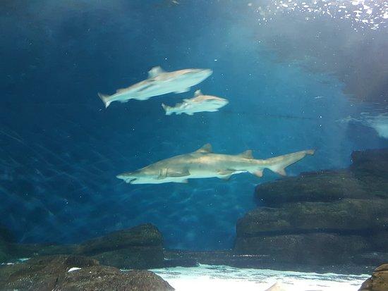 Shanghai Ocean Aquarium: Shark