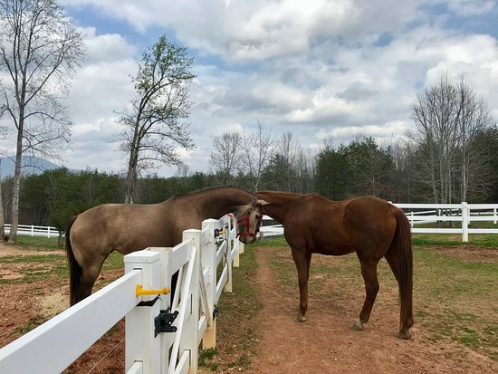 Landrum, Νότια Καρολίνα: Secret (on the left) meeting our new boarding horse (Dublin, right) for the first time.
