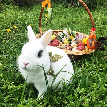 Country Home Knez: Our little Easter bunny🐇❤️