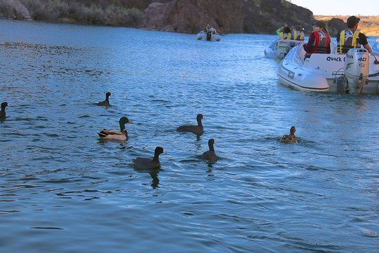 Lake Havasu: Boat Tour