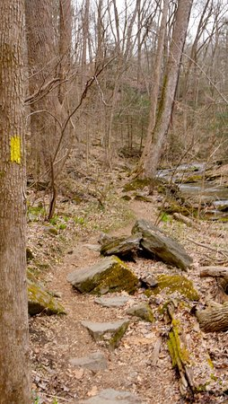 Holtwood, PA: Trails are very well marked with appropriately colored paint rectangles on tree trunks.