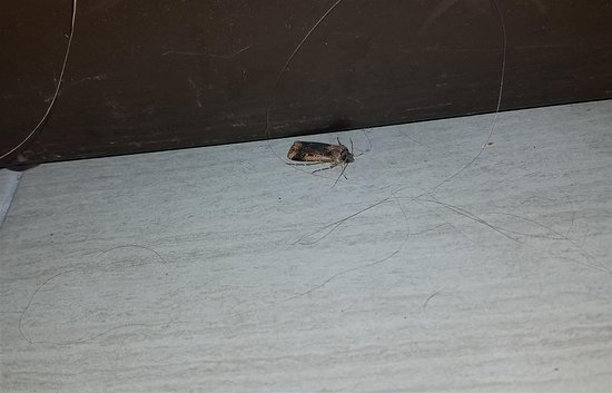 Knights Inn St Augustine/Historic District: Dead bug next to the bed