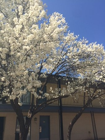 Woodward, OK: Spring has come