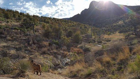 Miller Canyon: My dog hiding from Ranger Rick