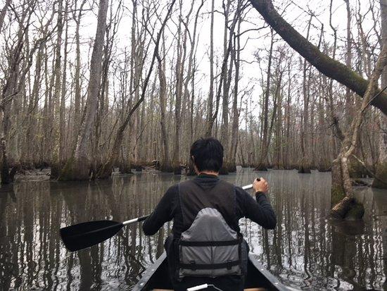 Williamston, NC: Canoeing down the Roanoke River