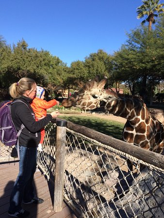 Reid Park Zoo: Feeding the giraffes.