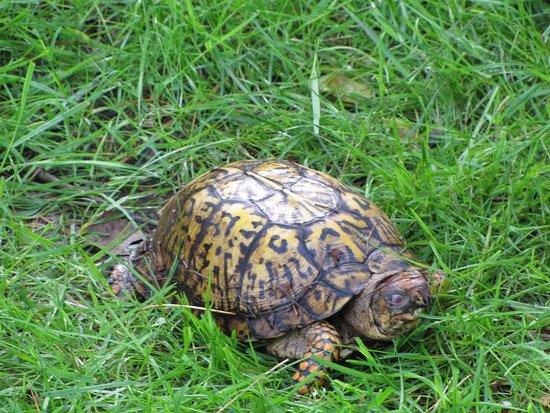 Ανατολικό Λίβερπουλ, Οχάιο: Turtle