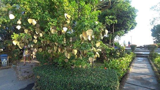 Grande Buddha di Phuket: Деревья с сердечками/листочками