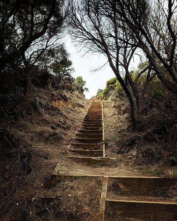 Great Otway National Park, ออสเตรเลีย: IMG_20180402_140542_735_large.jpg