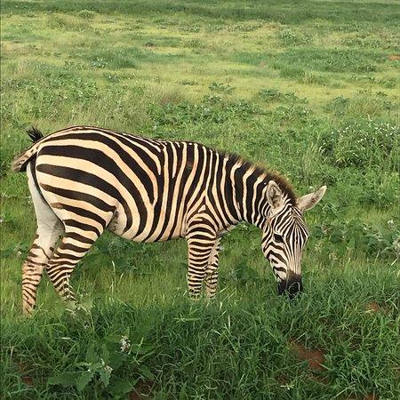 Juma Safari Kenya: photo6.jpg