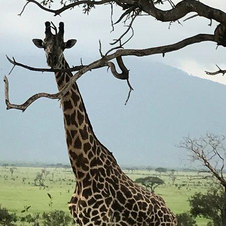 Juma Safari Kenya: photo7.jpg
