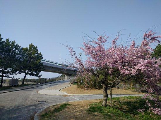 Nishikinohama Beach Park