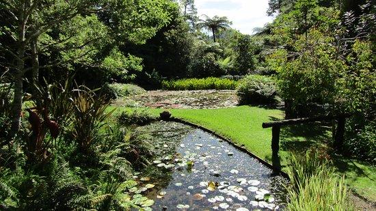 RAPAURA Watergardens Photo