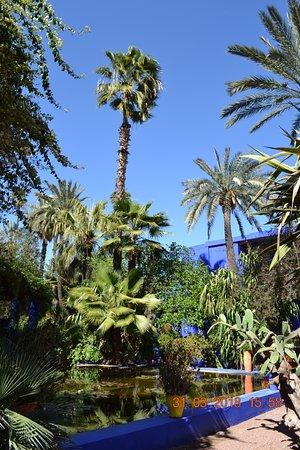 bassin d 39 eau picture of jardin majorelle marrakech. Black Bedroom Furniture Sets. Home Design Ideas