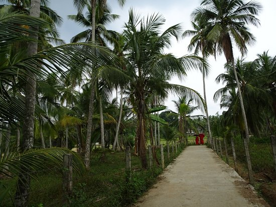 Mahamevnawa Amadahara Buddhist Monastery Pinnawala