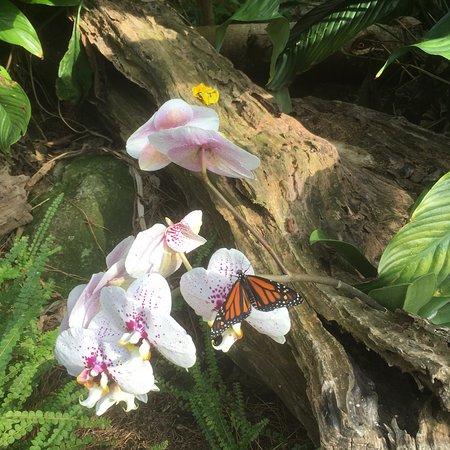 Casa delle Farfalle e Bosco delle Fate di Butterfly Arc: photo0.jpg